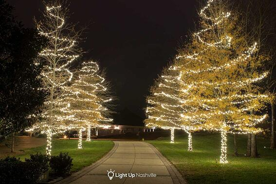 holiday lit walkway trees