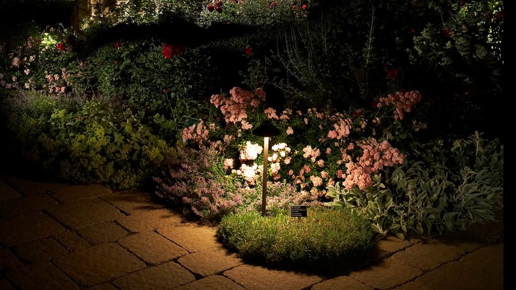 garden lighting on flowers